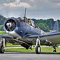 Douglas Sbd-5 Dauntless by Dan Myers