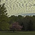 Douglassville Delight by Trish Tritz