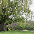 Down By The Weeping Willow by Amelia Painter