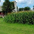 Down On The Wisconsin Farm by Ms Judi