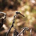Dragon Fly by Joey Gonzalez