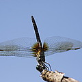 Dragonfly - Handstand by Travis Truelove