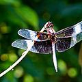 Dragonfly 0002 by Barry Jones