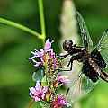 Dragonfly 2 by Joe Faherty