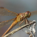 Dragonfly by Amy Jackson