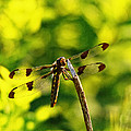 Dragonfly In Green by Susan Capuano