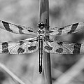 Dragonfly by Ken Wolter