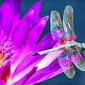 Dragonfly Lily by Paul Slebodnick