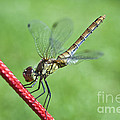 Dragonfly On A String by Heiko Koehrer-Wagner