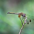 Dragonfly by Saurav Pandey