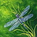 Dragonfly by Sherry Shipley