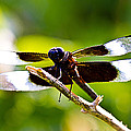 Dragonfly Stalking by Barry Jones
