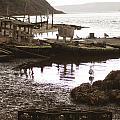 Drakes Bay Oyster Farm by Hiroko Sakai