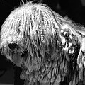 Dreadlock Dog by Andrew Fare