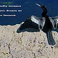 Dream Lofty Dreams by Sally Weigand
