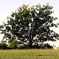 Dream Tree by Jennifer Stockman