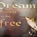 Dreams by Gwen Vann-Horn