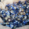 Dried Blue Flowers In Burlap Bag by Alexandre Fundone
