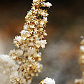 Dried Flower And Crystals by Marilyn Hunt