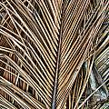 Dried Palm Fronds by Mark Sellers