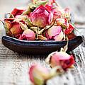 Dried Rose Buds by Kati Finell