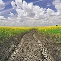 Dried Up Machinery Tracks by Dave Reede