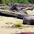 Drift Logs by Judy Garrett