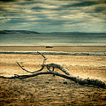 Driftwood 1 Lomo by Steve Purnell