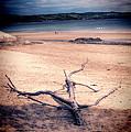 Driftwood 2 Lomo by Steve Purnell