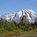 Driftwood And The Grand Tetons by Living Color Photography Lorraine Lynch