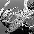 Driftwood by David Rucker
