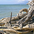 Driftwood II by Patricia Griffin Brett