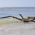 Driftwood In The Surf by Christine Stonebridge