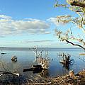 Driftwood Landscape 1 by Sheri McLeroy