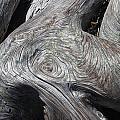Driftwood Ridges 5 by David Kleinsasser
