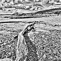 Driftwood Sketch by Steve Purnell