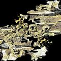 Driftwood Study 4 by Tim Allen