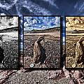 Driftwood Triptych by Steve Purnell