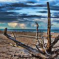 Driftwood V2 by Douglas Barnard