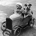 Driving Dog by Norman Smith