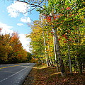 Driving Though The Birches by Sarah Lamoureux