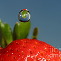 Droplet Falling On A Strawberry by Ted Kinsman