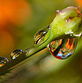 Drops Galore by Rima Biswas