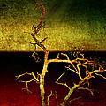 Drought  by Ellen Heaverlo