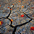 Dry Autumn by Mike Norton