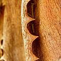 Dry Brown Aloe Vera Leaf by Werner Lehmann