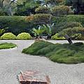 Dry Garden Sea by Elaine Plesser