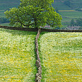 Dry Stone Wall And Lone Tree by Louise Heusinkveld