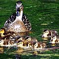 Duck And Ducklings by Don Mann