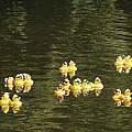 Duck Derby Ducks by Mick Anderson